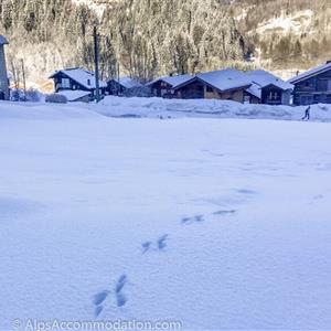 Can you tell which animal left these tracks?