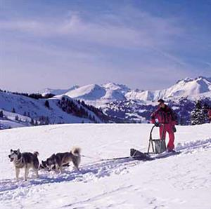 Dog sledding in Samoens